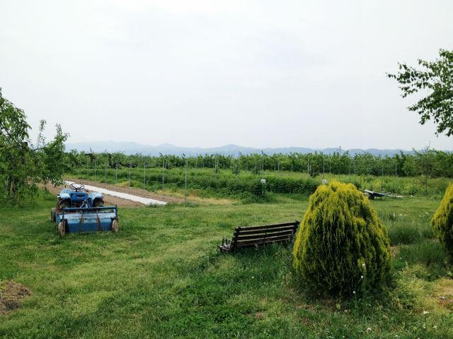 「ピザリア」農園